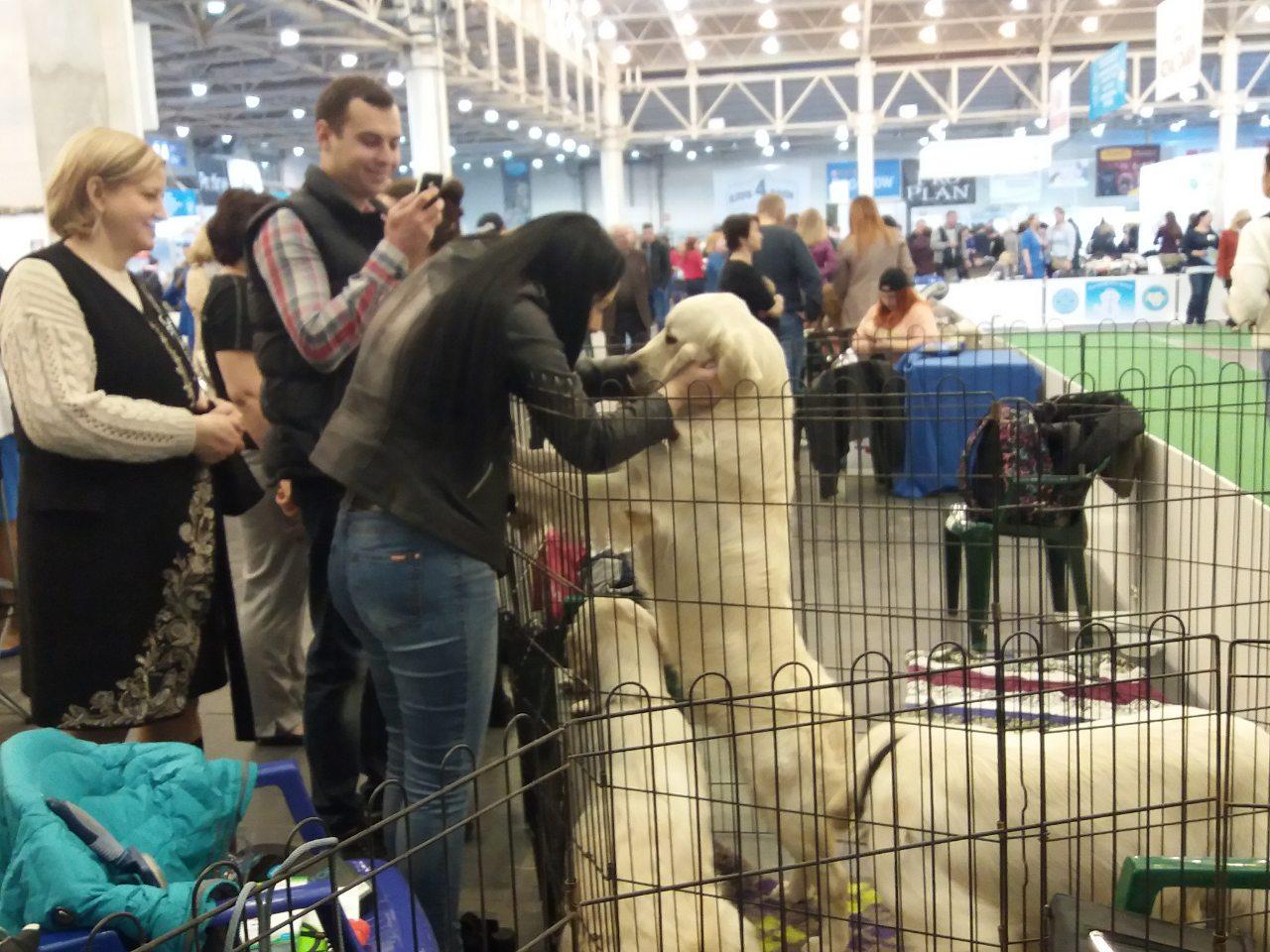 Виставка собак в Києві 20-21 квітня 2019 року