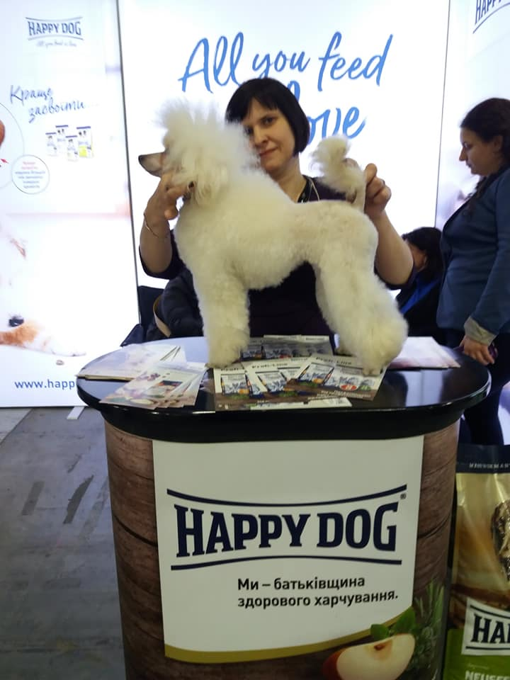 Виставка собак